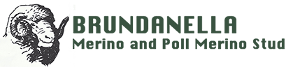 Brundanella Merino Stud Logo