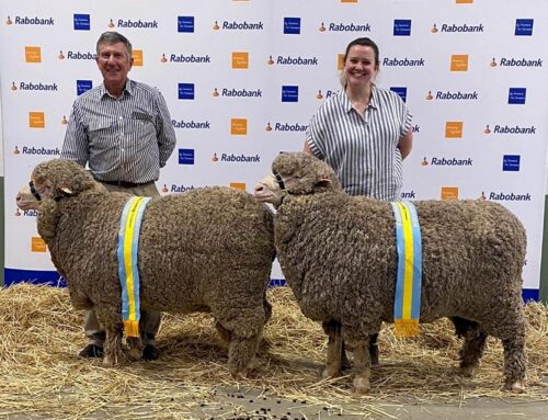 Reserve Champion Rams at Canberra Show 2020